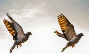 Upptäck mer med en fågelkikare