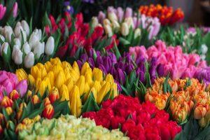 Blommor att ge bort